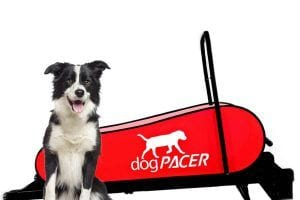 dogpacer treadmill review