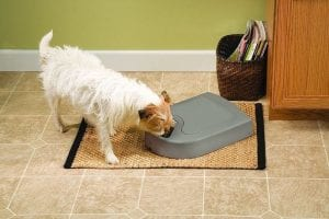meal 5 dog automatic feeder