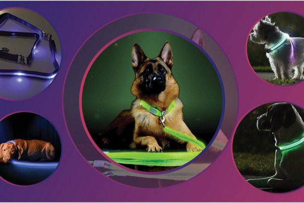 best led dog leashes