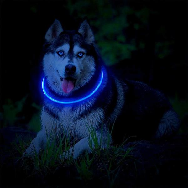 Fashion Cool Light Up Dog Collar - TOP-17 LED Dog Collars in 2019