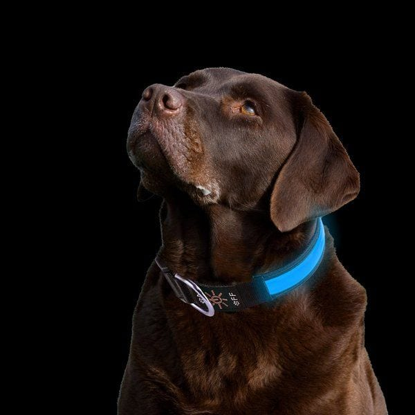 PetIsay LED Dog Collar - TOP-17 LED Dog Collars in 2019