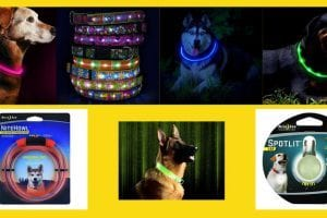 led dog collars