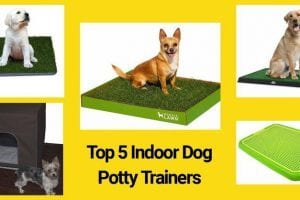 Best Indoor Dog Potty Trainers