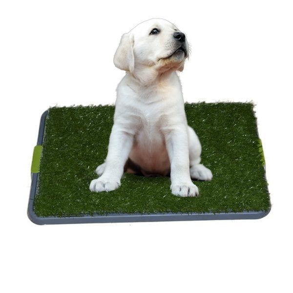 Sonnyridge Easy Dog Potty Training