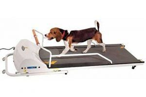 PetRun PR720F Dog Treadmill