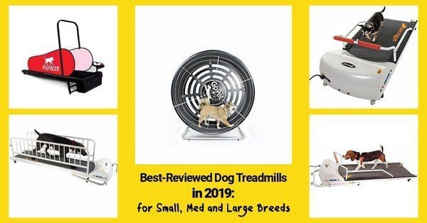 best dog treadmills 2019