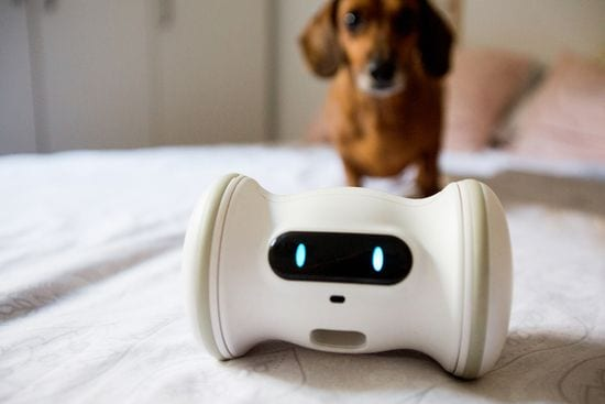 Varram: Smart Robot To Help Maintain Dogs Mental and