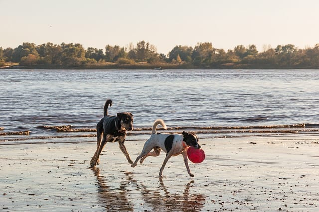 dog beach in Florida