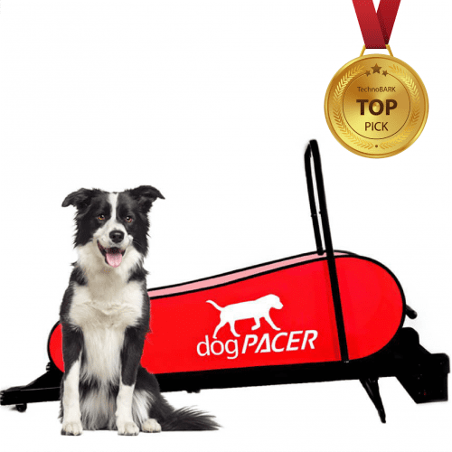 medal 01 e1566715605919 - Best Dog Treadmills Reviewed in 2019: for Small, Medium and Large Dogs