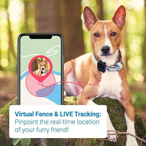 Tractive collar live tracking feature