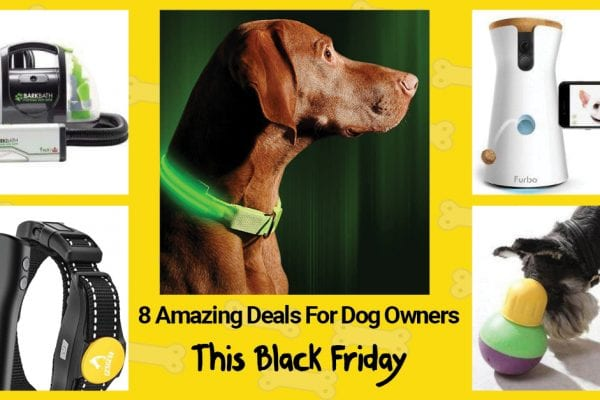 8 Amazing Deals For Dog Owners This Black Friday