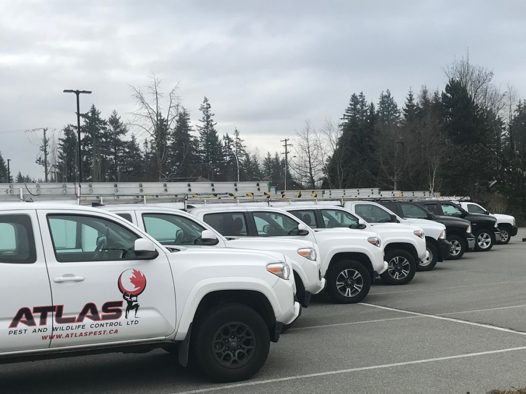 vehicle fleet pest control Vancouver GRVD