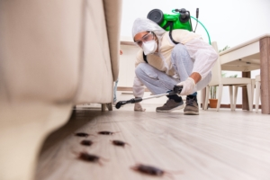 we can help you remove cockroaches in your burnaby house